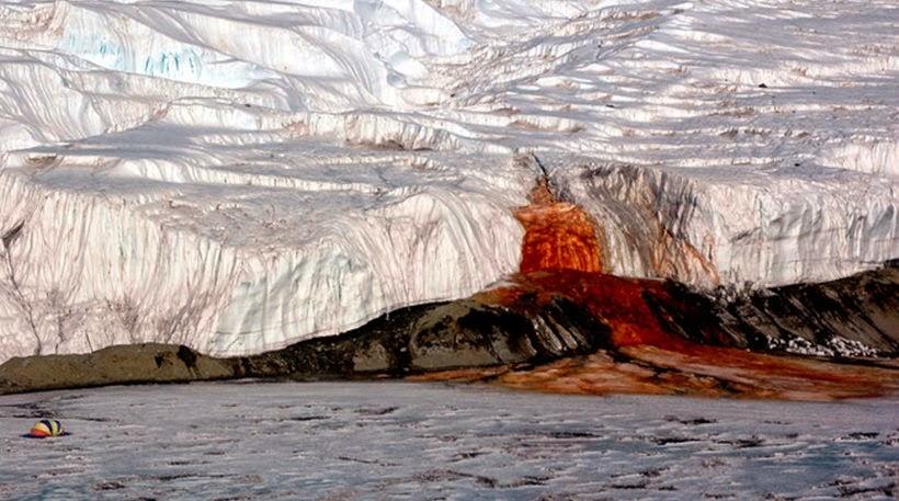 antarktiki-o-pagetonas-pou-aimorragei
