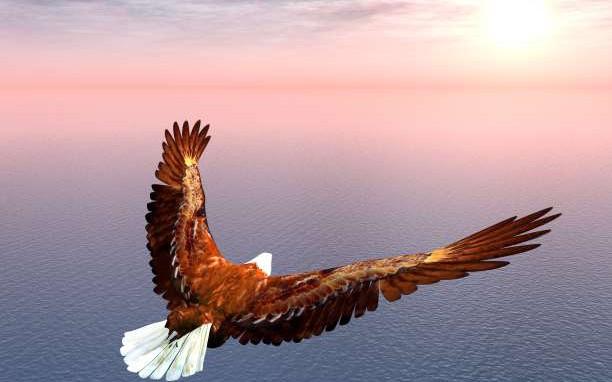 Αποτέλεσμα εικόνας για Η παραβολή του αετού που νόμιζε πως ήταν κοτόπουλο