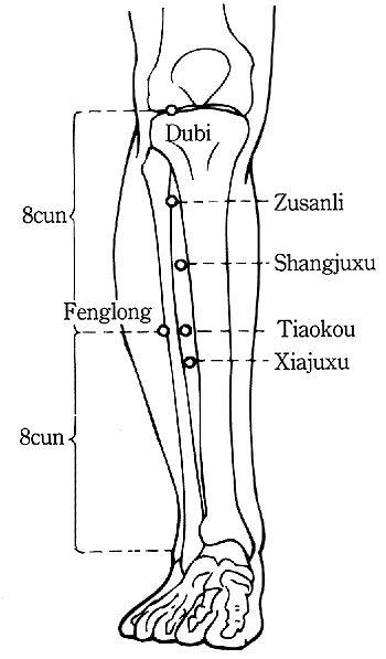 zu-san-li-body