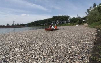 indonesia-fish
