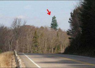 Νομίζετε πως πρόκειται για ένα δένδρο; Κοιτάξτε πιο προσεκτικά…