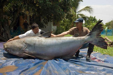 Largest fish caught fishing Photoshop Picture