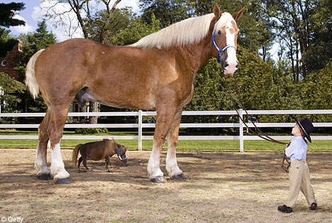 Largest horse Photoshop Picture