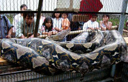 Largest Snake Photoshop Picture