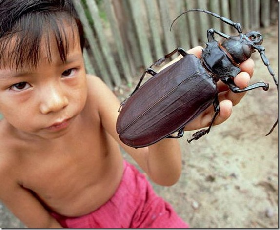 Largest Insect Photoshop Picture