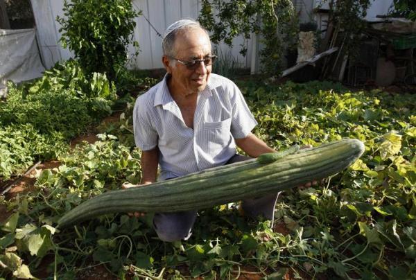 Largest cucumber Photoshop Picture