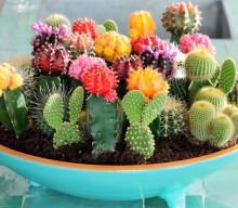 Φενγκ Σούι: Αυτά είναι τα πιο γρουσούζικα πράγματα που έχετε στο σπίτι σας!